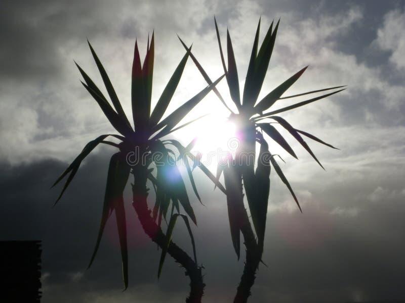 Sun a través de las palmeras en la playa de Clarks imagen de archivo