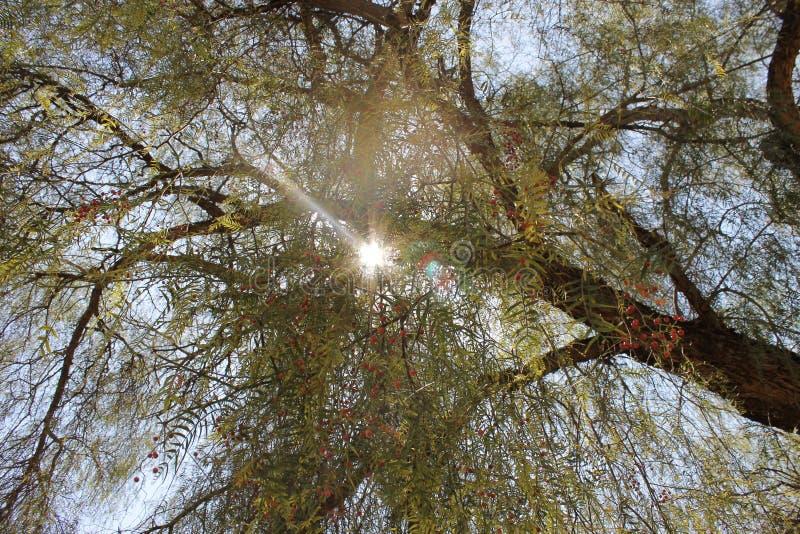 Sun a través de los árboles imagen de archivo libre de regalías