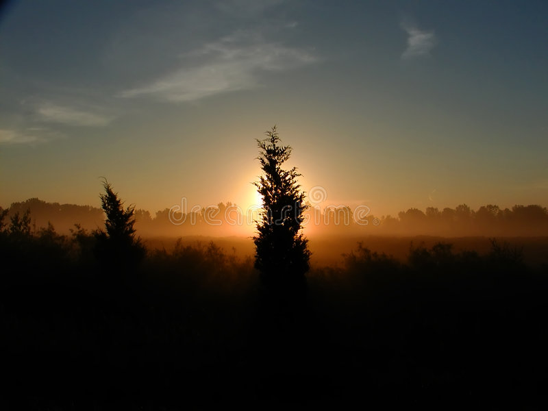 Download Sun And Tree Stock Image - Image: 4551