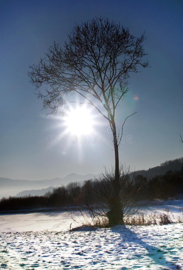 Download Sun & Tree stock image. Image of flare, shadow, snow - 10596085