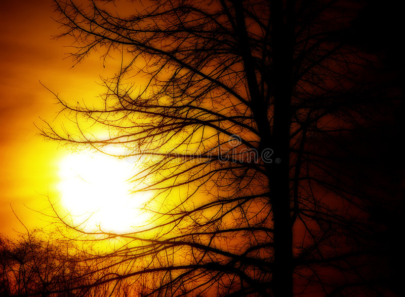 Download Sun and Tree stock photo. Image of branches, tree, silhouette - 2578388