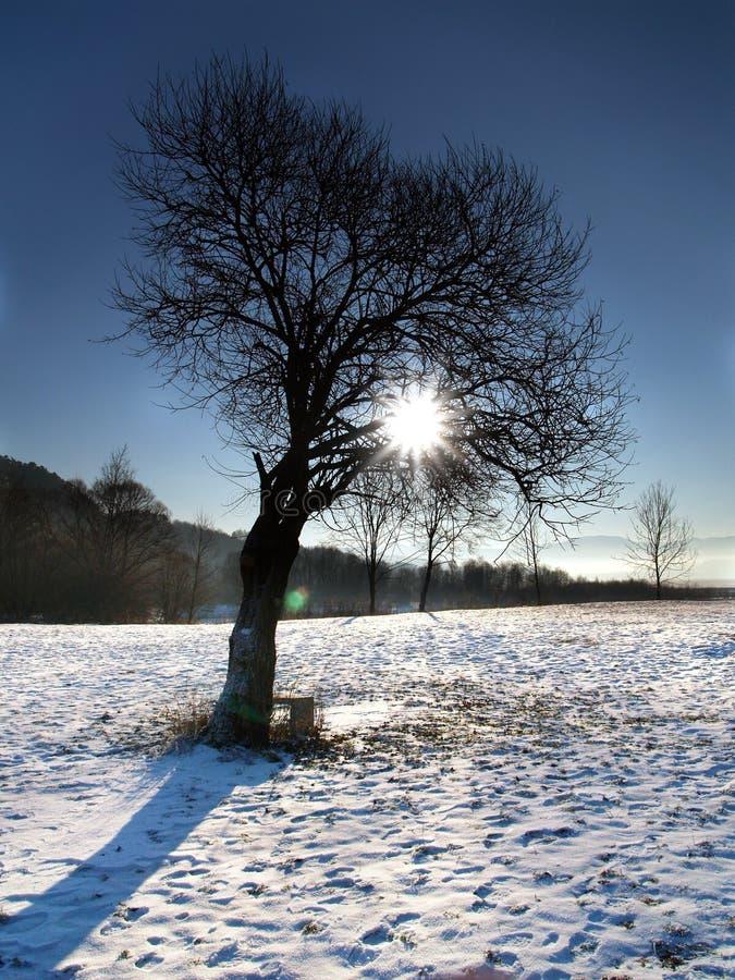 Sun & Tree. Shot of the sun shining through tree in a winter royalty free stock photos