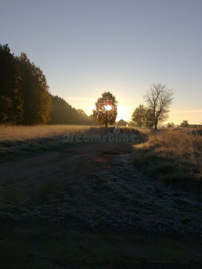 Sun tree royalty free stock photos