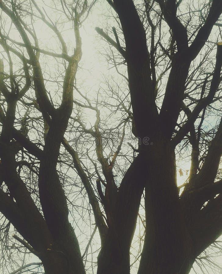 Sun tree stock images