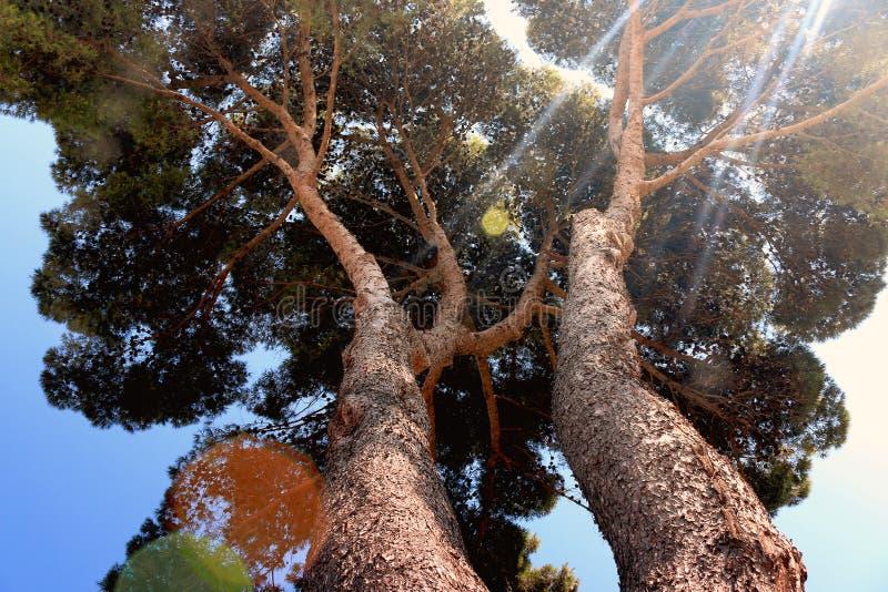 Sun Through Tree Top Free Public Domain Cc0 Image