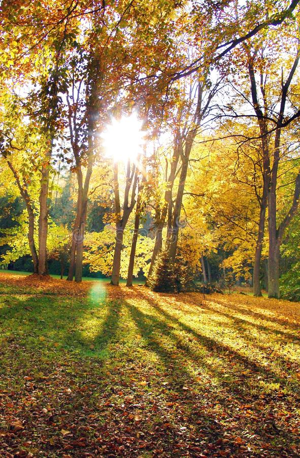 Download The Sun & Trees Royalty Free Stock Photo - Image: 10214355