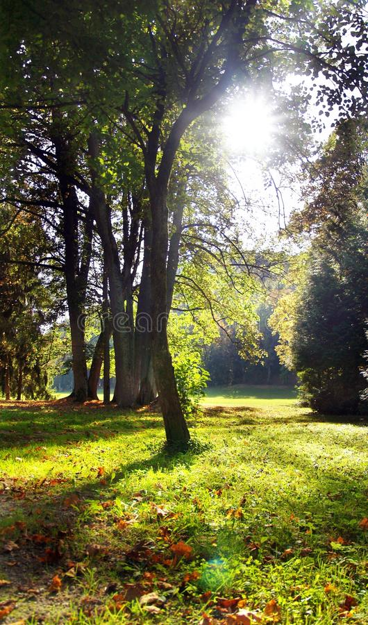 Download The Sun & Trees Royalty Free Stock Photos - Image: 13178288