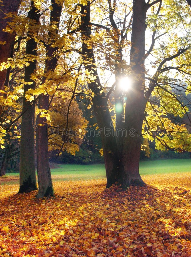 Sun & Trees. Shot of the sun shining through trees in a park during late evening in autumn stock photo