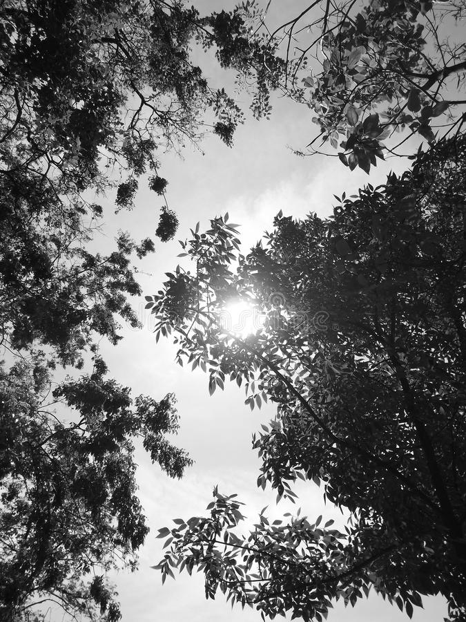 Sun and trees royalty free stock photography