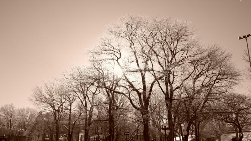Sun between trees in a park. In Quebec City in winter Canada stock images