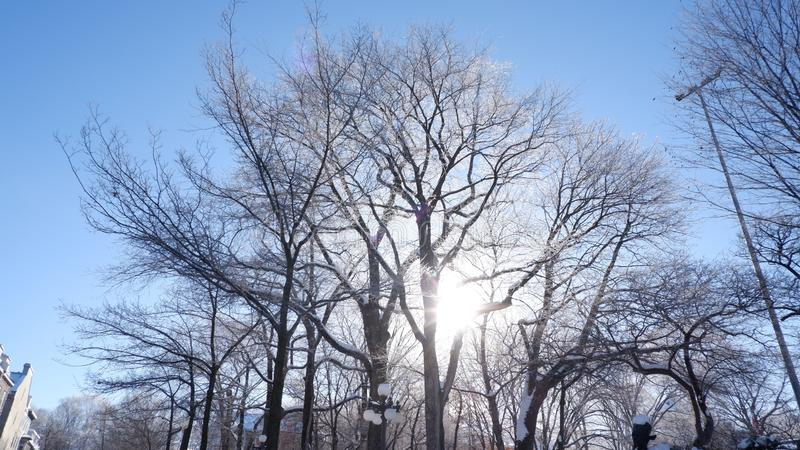 Sun between trees in a park. In Quebec City in winter Canada royalty free stock images