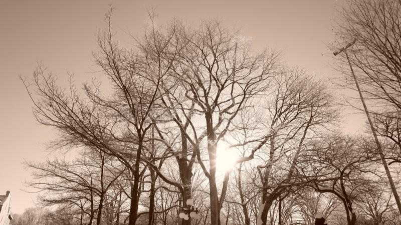 Sun between trees in a park. In Quebec City in winter Canada stock photos