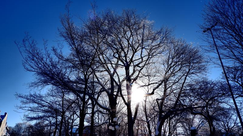 Sun between trees in a park. In Quebec City in winter under a beautiful blue sky Canada stock photos