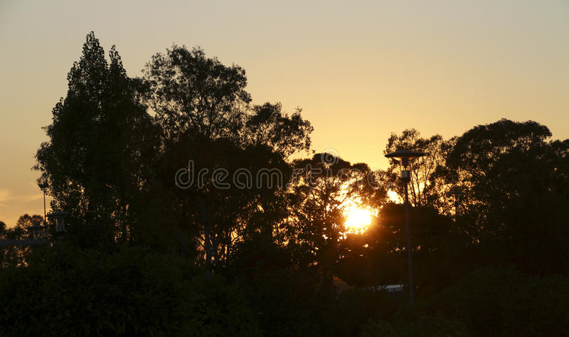 Sun through the trees royalty free stock photo