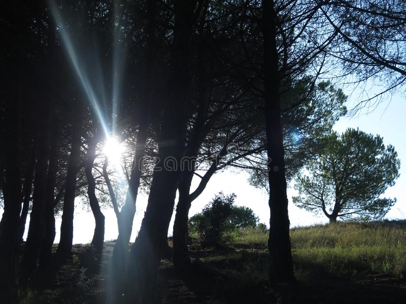 Sun between the trees. Relaxing ray of sun rising among the grove of the mountain stock photos