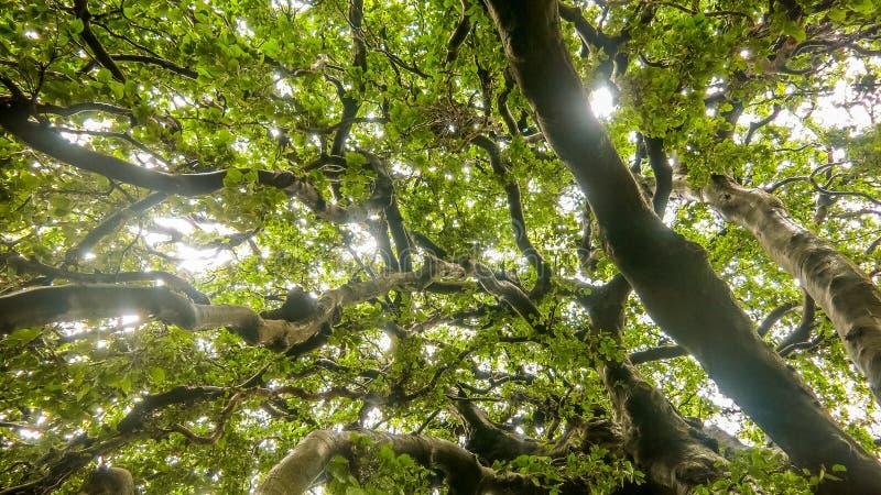 Sun through the trees royalty free stock image