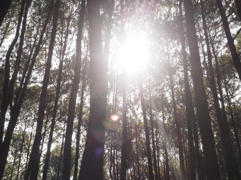 Sun on the trees royalty free stock photo