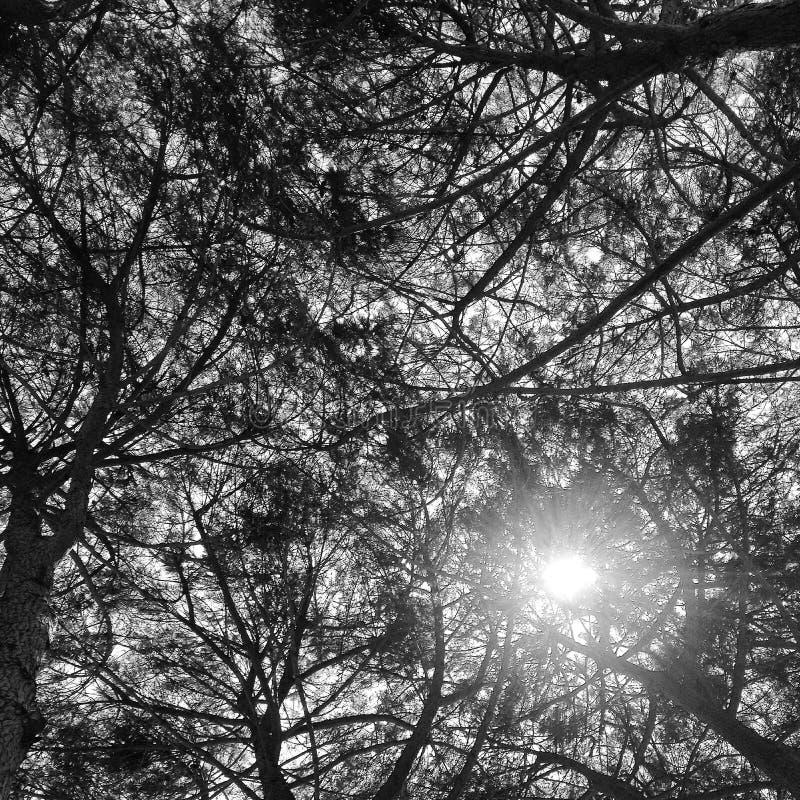Sun through trees stock images