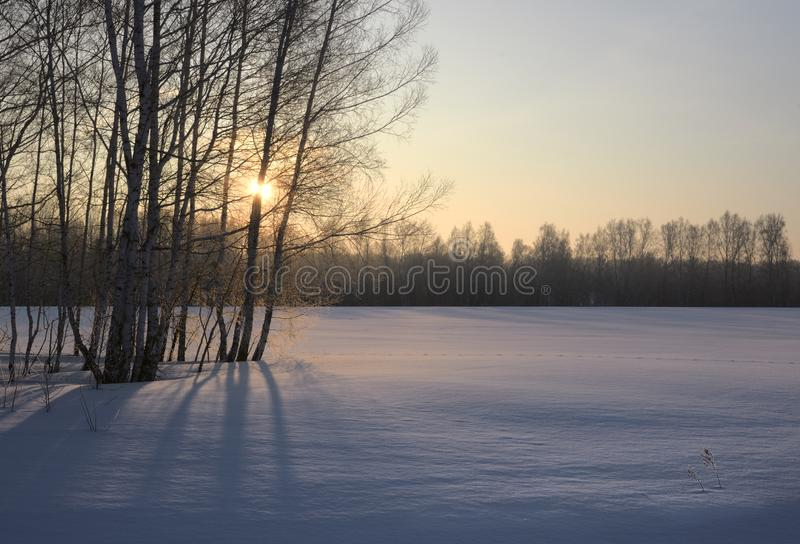 Sun through trees in winter. The rising sun breaks through the bare trees. The winter field is covered with blue snow. Yellow blue color. Nature of Siberia stock photos