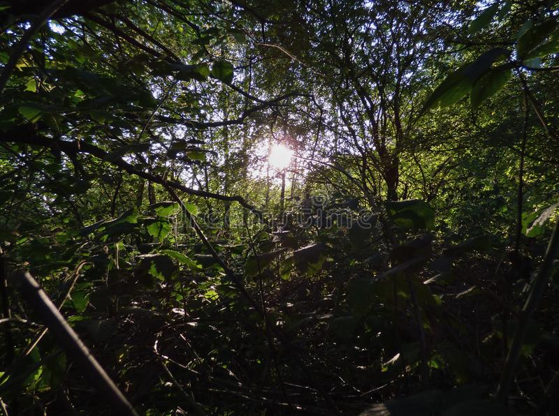 Sun through tress, dark foreground with bright sunshine, photo taken in the UK. Sun shining through the tress, dark foreground with bright sunshine, photo taken royalty free stock photography