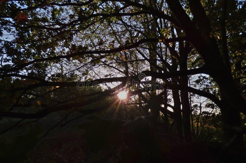 Sun through tress, dark foreground with bright sunshine, photo taken in the UK. Sun shining through tress, dark foreground with bright sunshine, photo taken in royalty free stock images