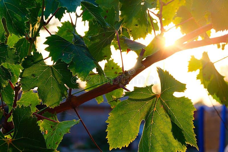 Sun und Blätter stockbild