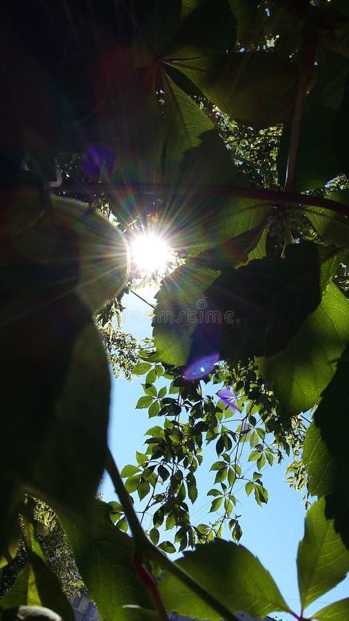 Sun und Licht Grüner Baum lizenzfreie stockbilder