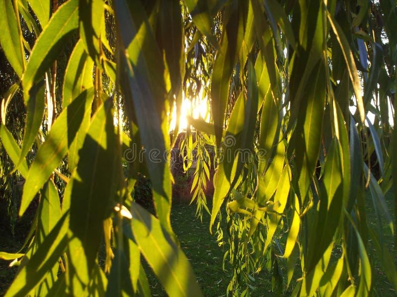 Sun und Schatten lizenzfreies stockfoto