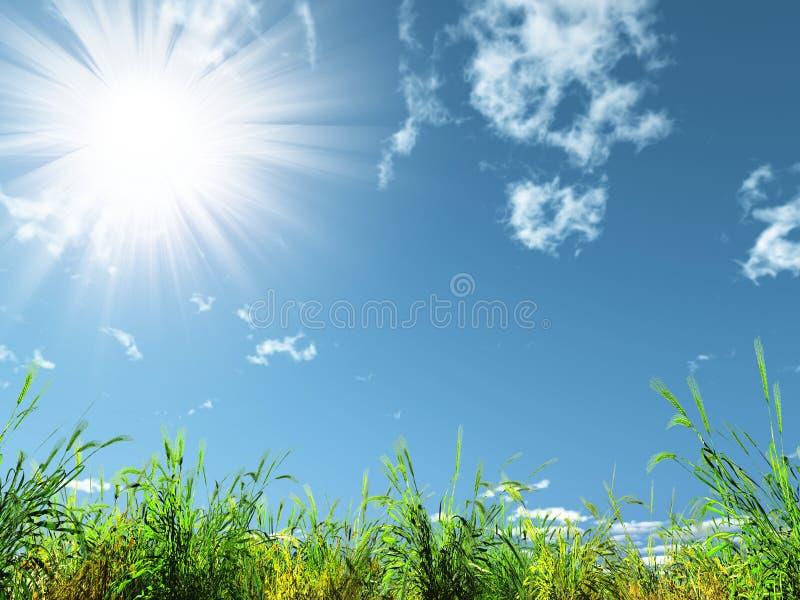 Sun und Wiese stockfoto