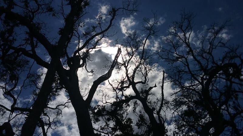 Sun und Wolken hinter Bäumen lizenzfreie stockfotografie