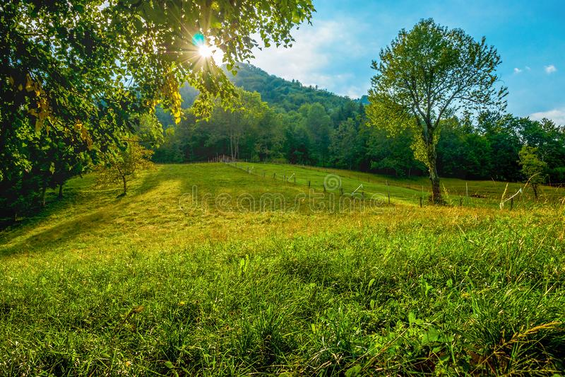 Sun unter den Bäumen in einer grünen Bergwiese lizenzfreie stockfotos