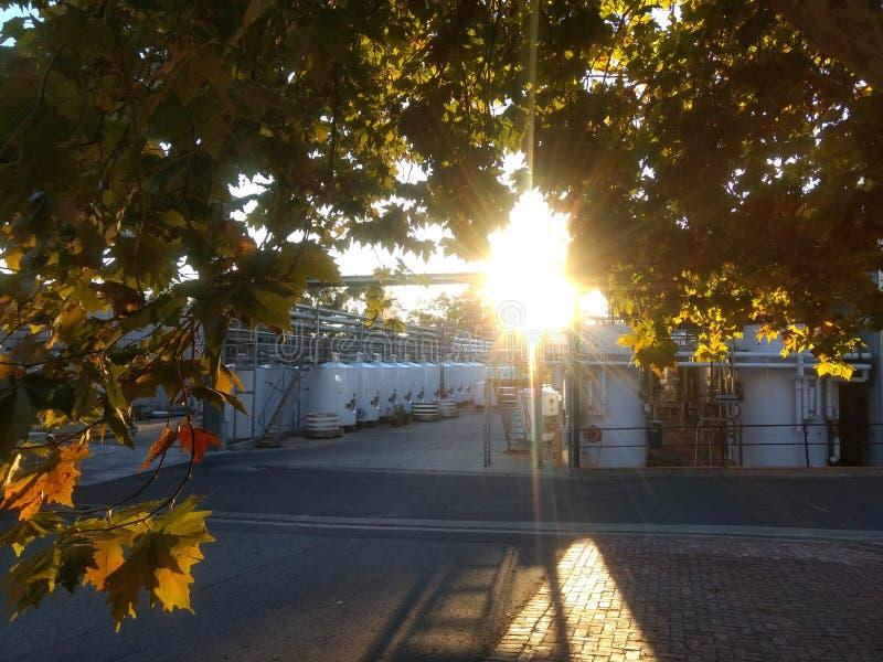 The Sun Ustawia nad wytwórnią win obrazy stock
