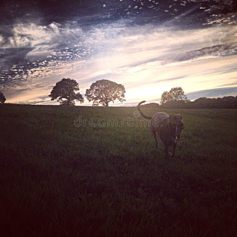 Sun vers le bas avec un type céleste de ciel images stock