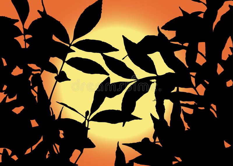 Download Sun View Through Leaves Stock Images - Image: 11597784