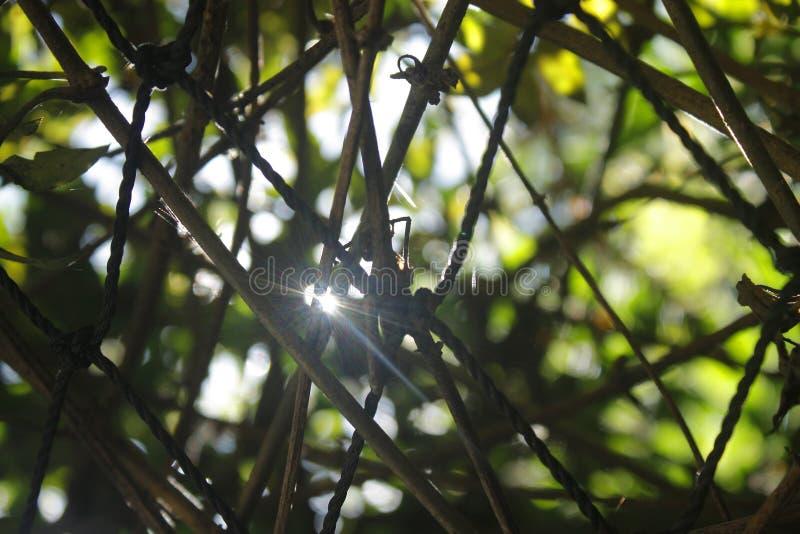 The Sun werpt de Druiven stock fotografie