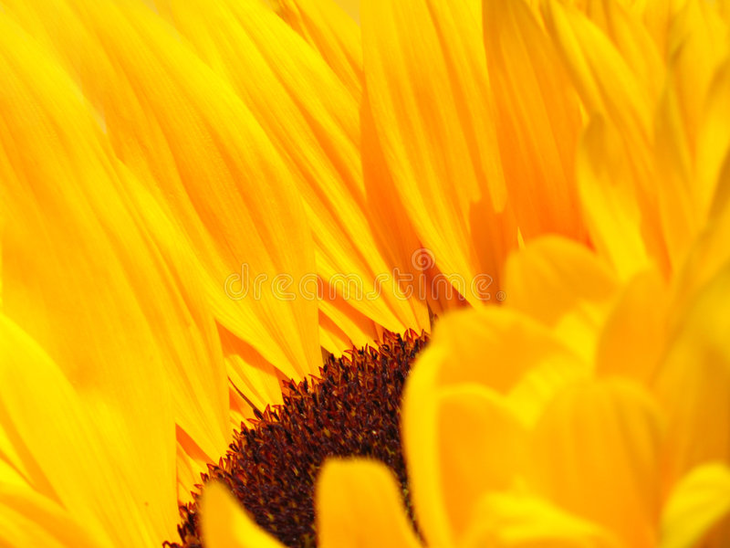 Sun Worship royalty free stock images