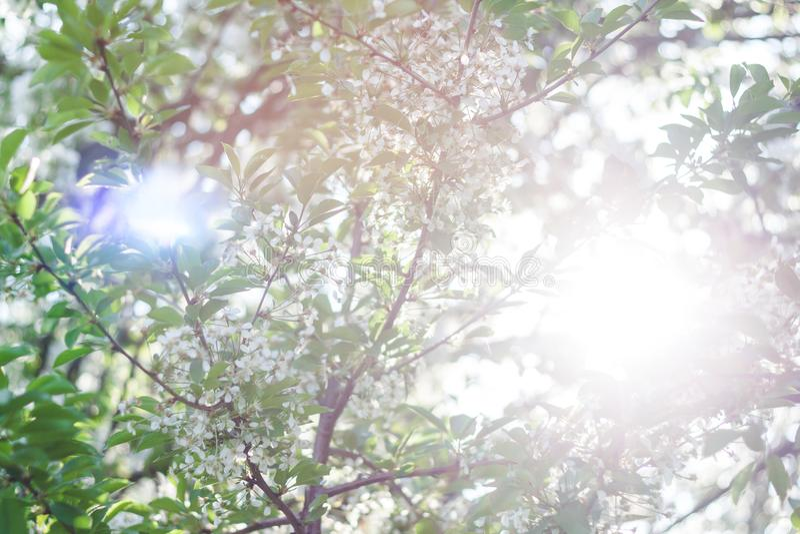 Sun y árbol floreciente imágenes de archivo libres de regalías