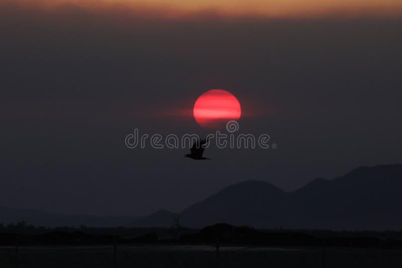 The Sun y Eagle foto de archivo libre de regalías