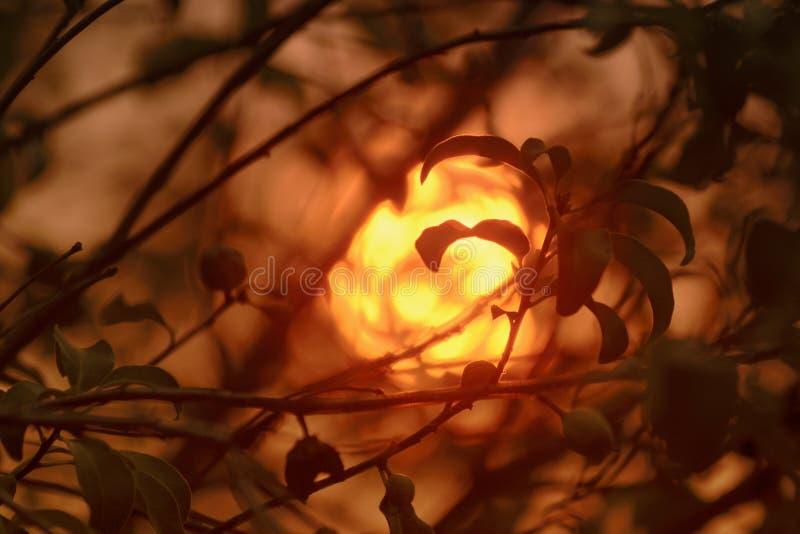Sun y humo foto de archivo libre de regalías