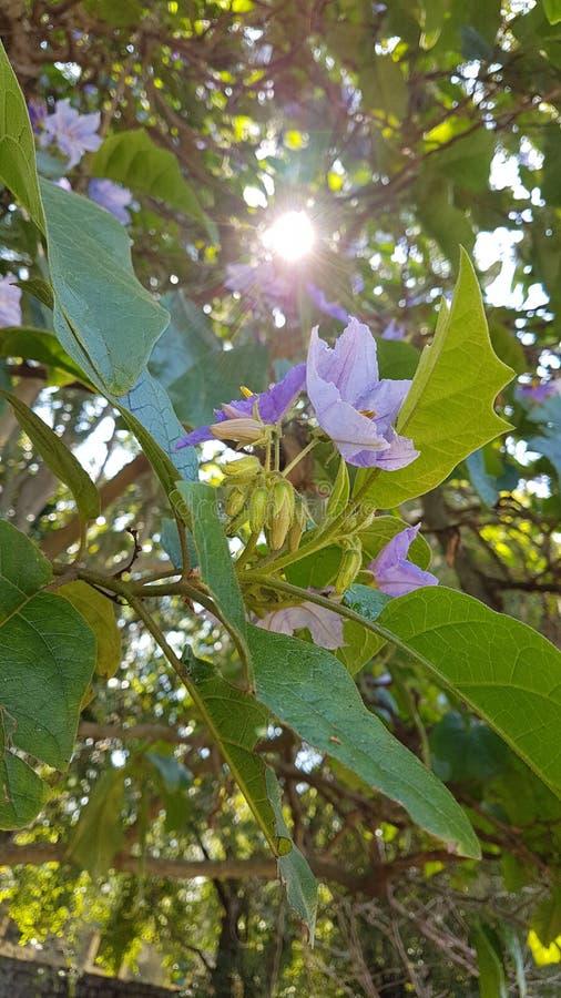 Sun y las flores imagenes de archivo