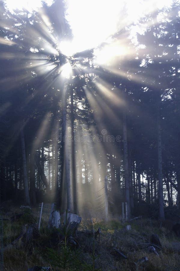 Sun y niebla imágenes de archivo libres de regalías