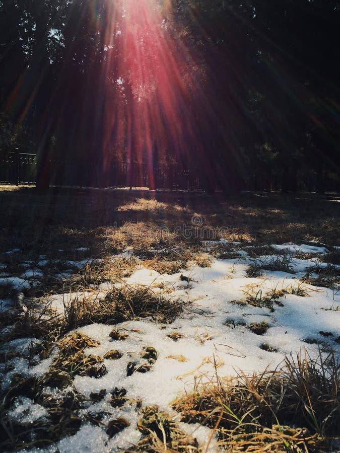 Sun y nieve fotografía de archivo libre de regalías