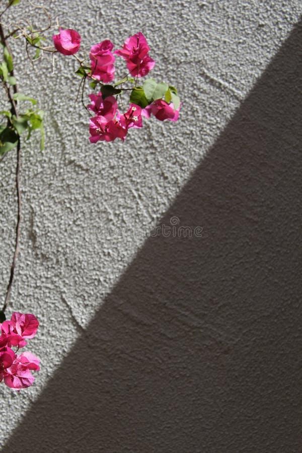 Download Sun y sombra foto de archivo. Imagen de minúsculo, fondo - 100526416