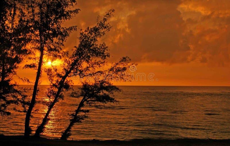 Sunaet op Kauai stock afbeeldingen
