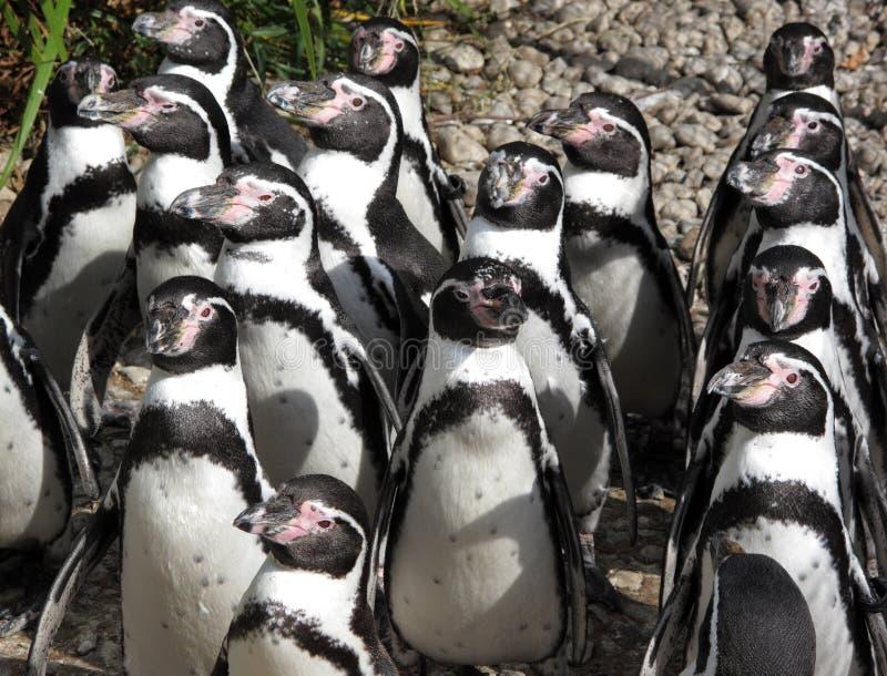 sunbath пингвинов стоковое изображение