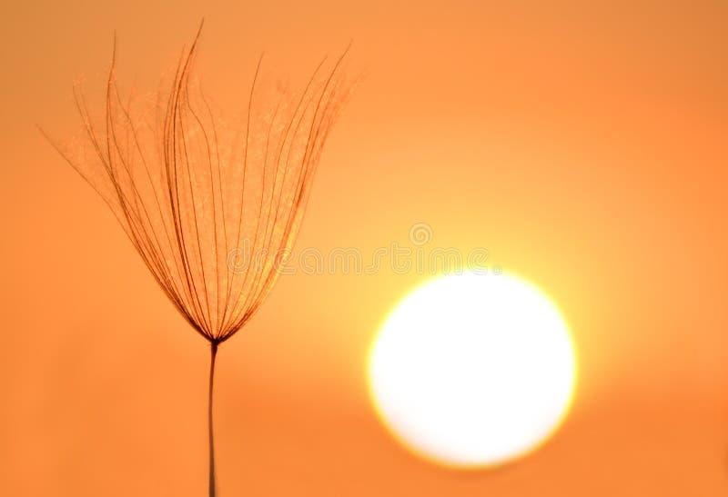sunbathing foto de archivo libre de regalías