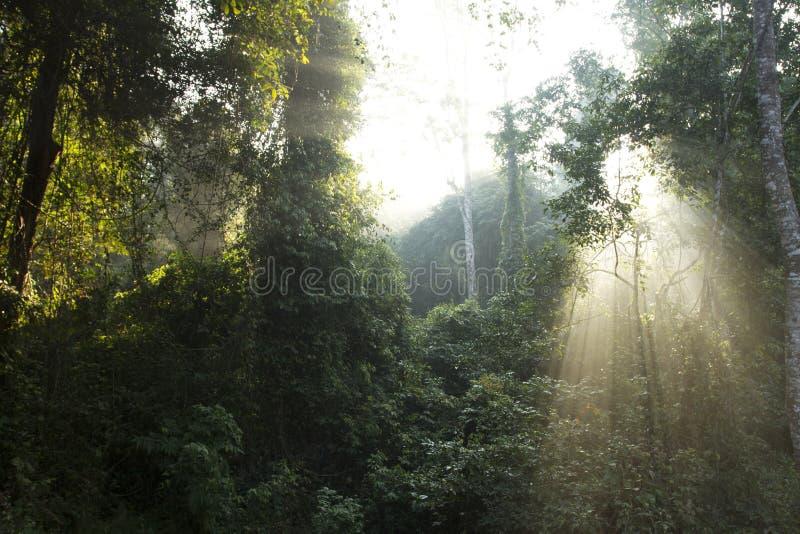 Download Sunbeam stock image. Image of background, foliage, landscape - 23943905