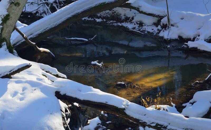 Sunbeam in brook stock photo