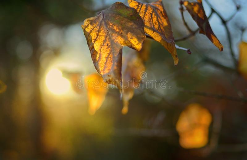 Sunbeam royalty free stock photography