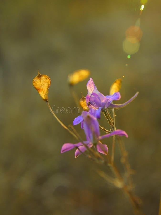 A sunbeam goes down on purple flowers stock image